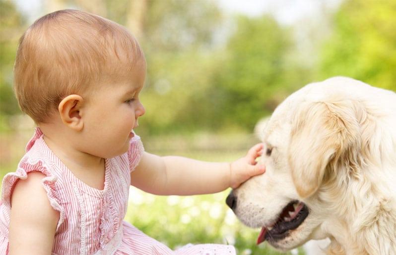 bebe con un perro