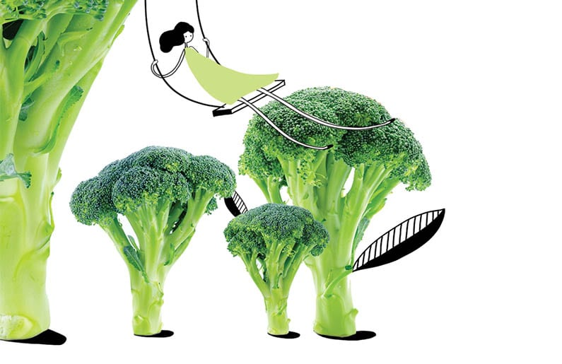 Brócoli (6 meses + )
