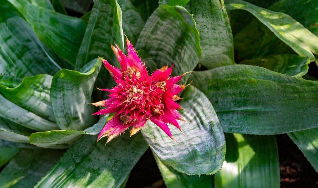 Jardines botánicos en CDMX
